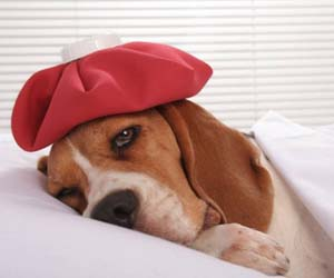 Ciri-ciri anjing sedang sakit