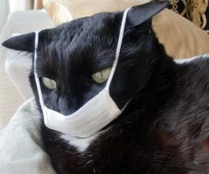 Kucing kena flu
