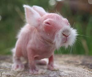 Bulu kelinci rontok