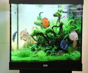 Gambar aquascape